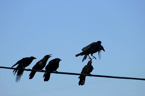 04b 500 crow hop