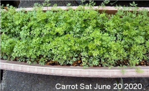 01b 600 200620 Carrot