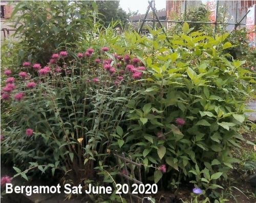 01d 600 200620 Bergamot