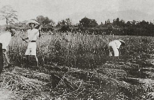 09a 500 Atarashiki_Mura_in_1919