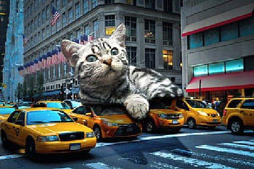 09b 500 cat_giant_fun
