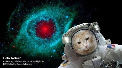 09a 600 NASA cat