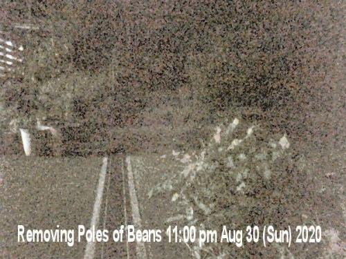 01b 600 removing bean poles 11時20200830