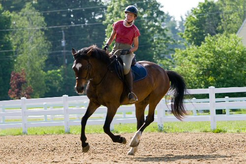 03b 500 for older horse