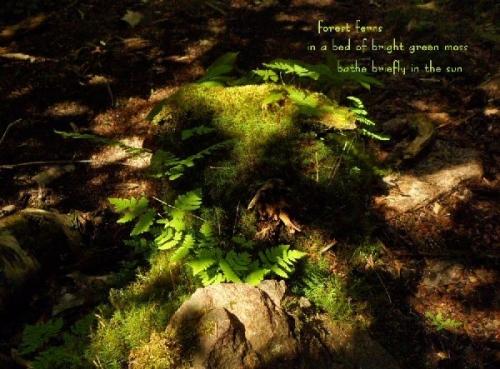 04a 600 20140708 a (火) forest ferns