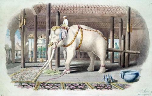09a 600 a white elephant