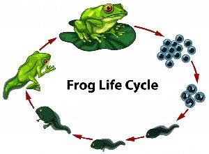09b 300Flog Life Circle