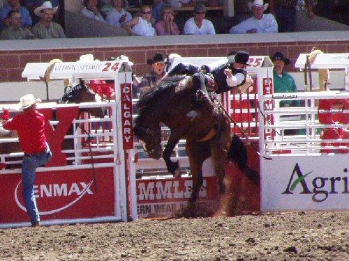 04b 500 bronc at rodeo