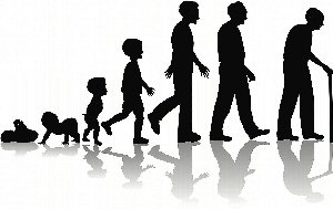 09a 300 human life stage development