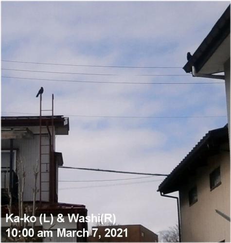 01b 600 210307 Kako Washi