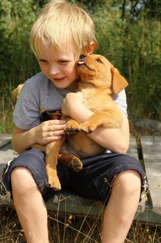 04b 600 puppy boy