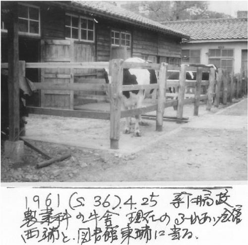 1ba 600 1961_s36_0425 新井高牛舎