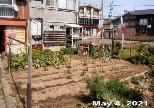 0c 600 20210504 LL_garden