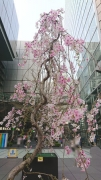Tokyointernationalforum.jpg