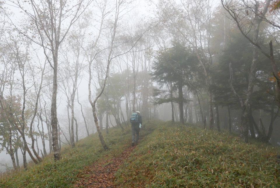 20788 霧の中を進む 960×645