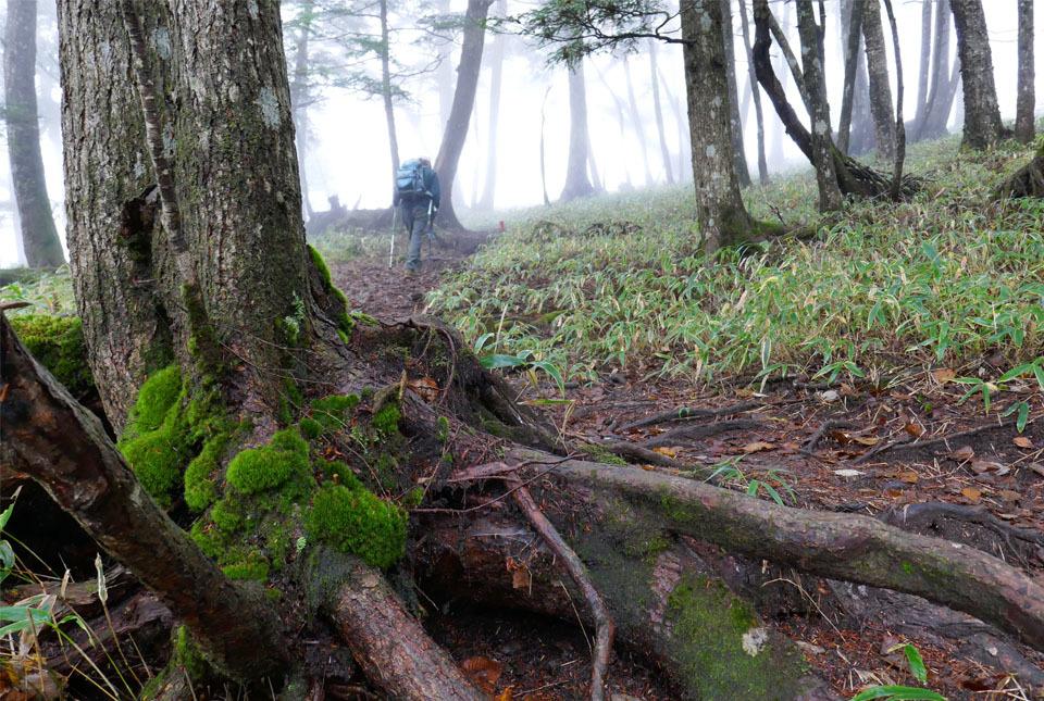 20809 霧の中を進む 960×645