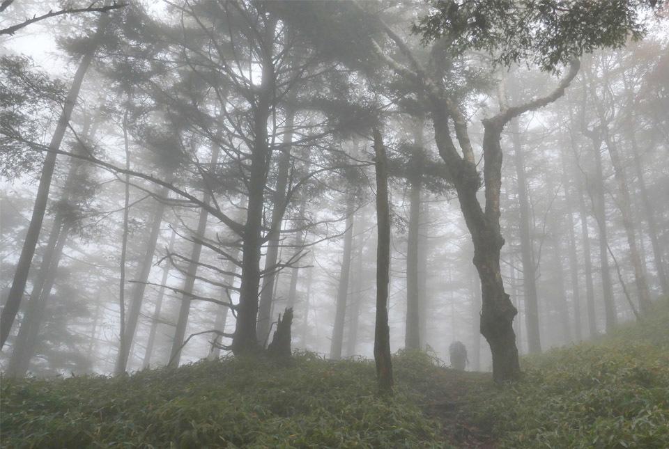 20826 霧の中を進む 960×645