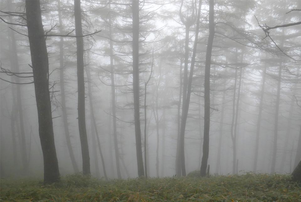 20833 霧の樹林 960×645