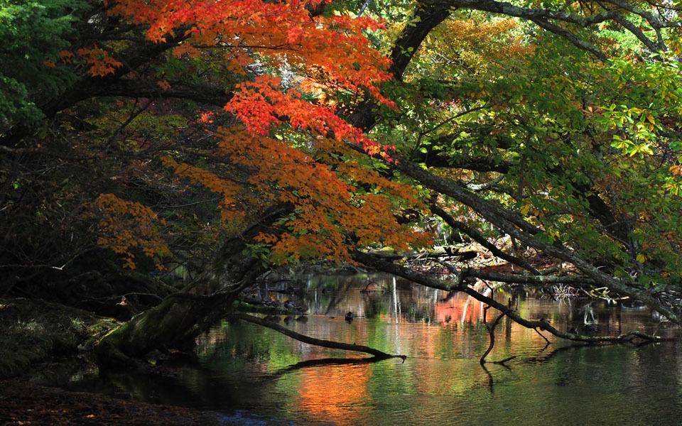 69367 湯ノ湖の紅葉 960×600