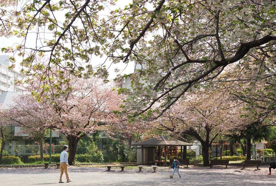 210403-33514 八重桜3 960×645