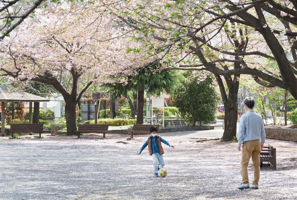 210403-33515 八重桜3 960×645