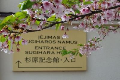 sugiharamuseumkaunasu0920