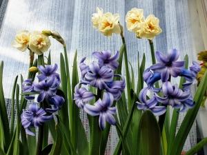 flowers0320
