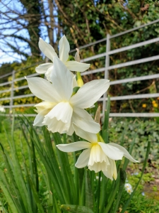 flowers03203