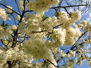 flowers03205