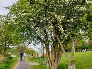 naturewalkwarmemorialgardens04205