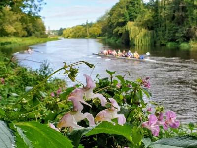 riverliffeyrowing0820