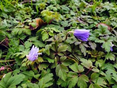 botanicgarden050221