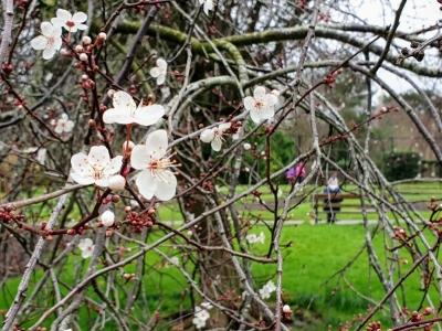 botanicgarden0502213