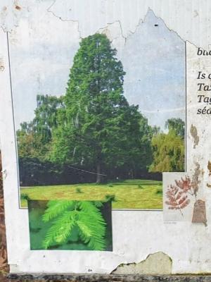 botanicgarden05022115