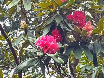 botanicgarden05022118