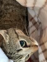 IMG_2531 キジ猫