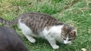 IMG_2523 助成金対象猫