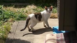 IMG_2524 助成金対象猫