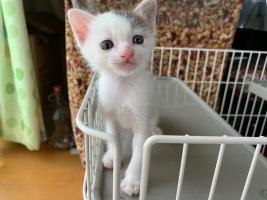 IMG_4013 ガリガリの仔猫