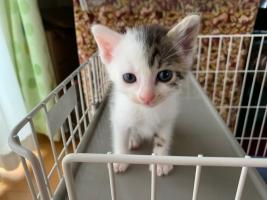IMG_4010 ガリガリの仔猫