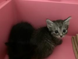 IMG_4063 子猫