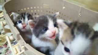 IMG_6160 (1) 子猫10月