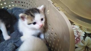 IMG_6158 子猫10月