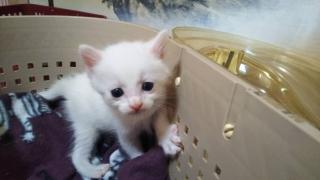 IMG_6157 (1) 子猫10月