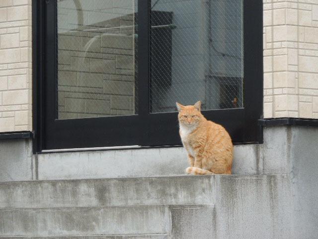 地域猫DSCN0048