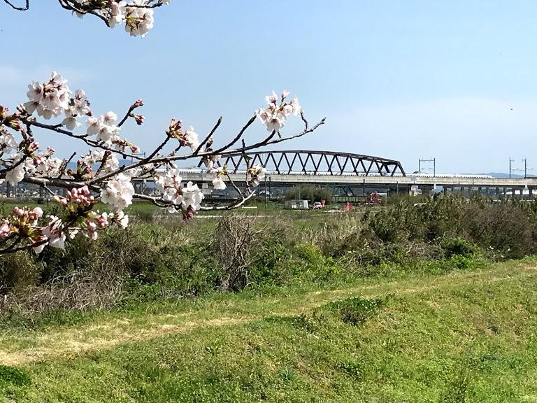 桜と新幹線さくら