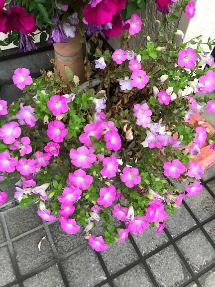 母の日の花
