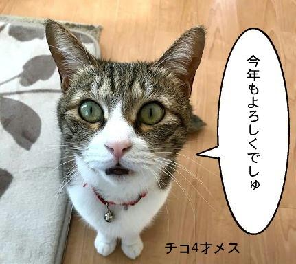 chiko003.jpg