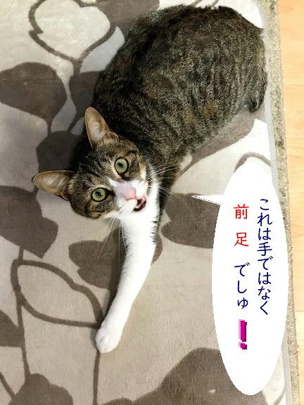 chiko0701-2.jpg