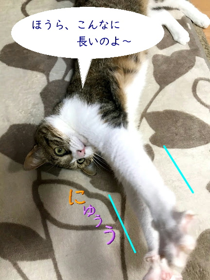chiko0701-4.jpg